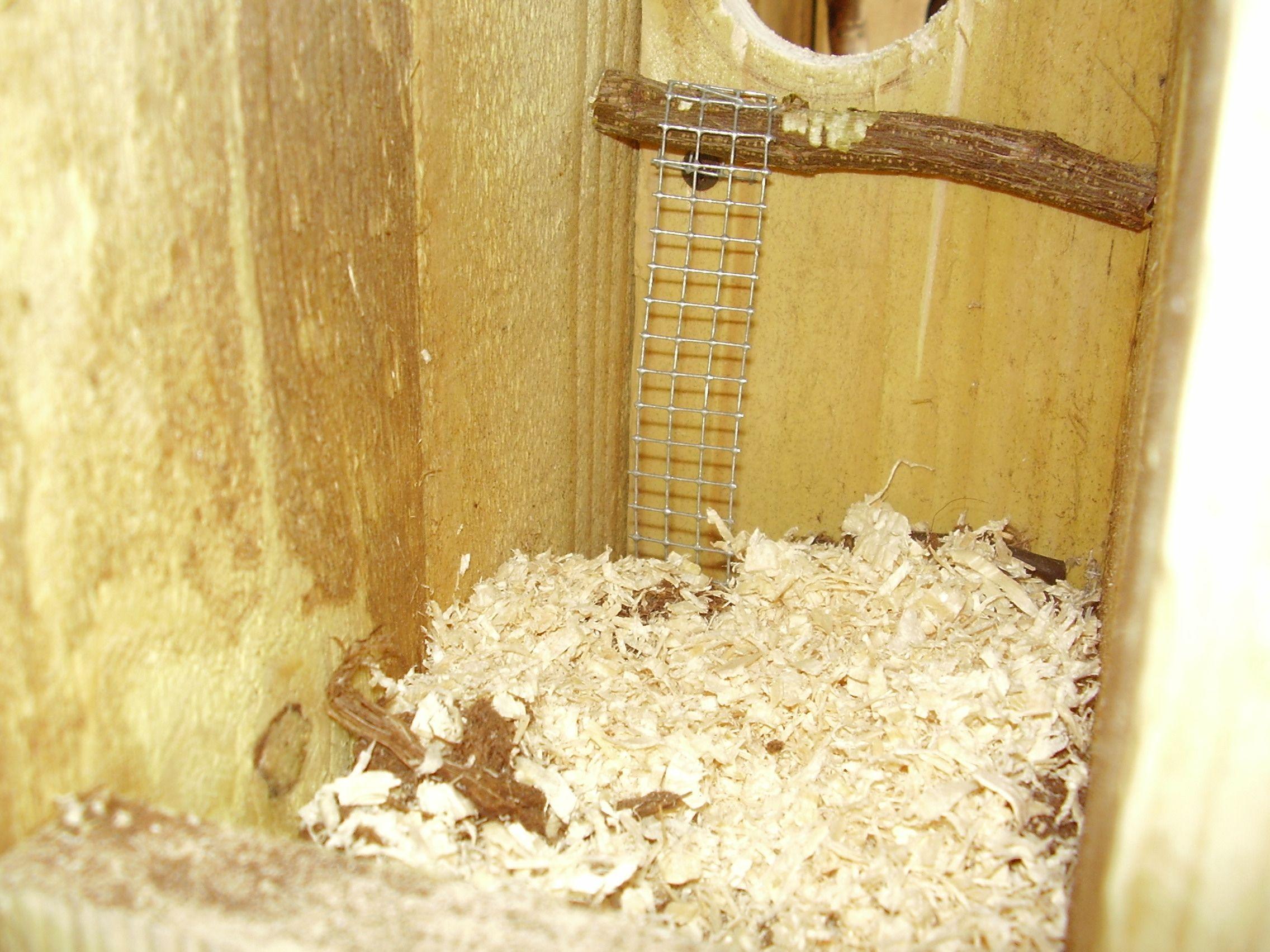 Interieur d 39 un nid quoi mettre for Copeaux de bois pour fumoir
